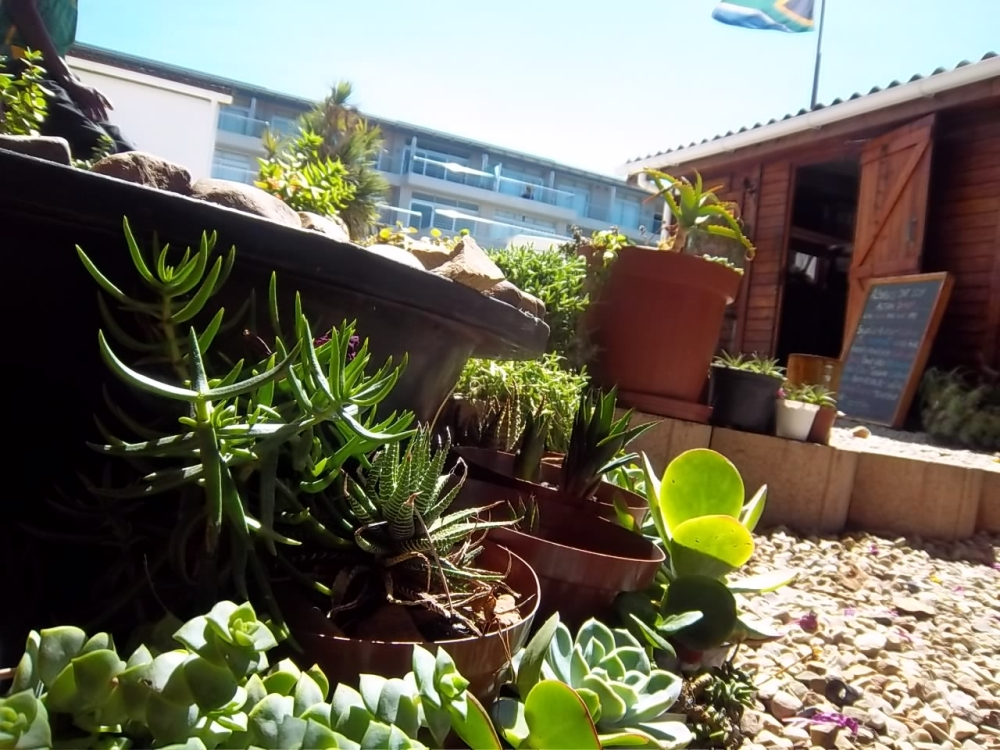 Garden at Albergo for Backpackers